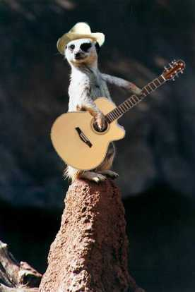 This is a meerkat. - random Photo