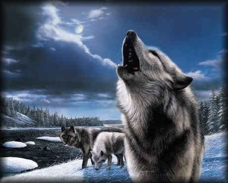 Wolves Images Howling Wallpaper And Background Photos
