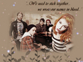 parawall - paramore wallpaper