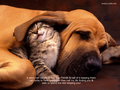 Friendship - peterslover wallpaper