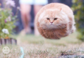 HOVER CAT!