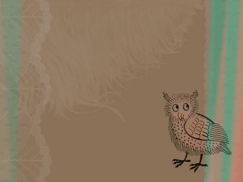 Little Owl Обои