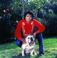 MJ And Bulldog Large - michael-jackson photo