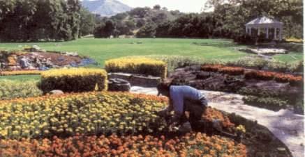Michael Gardening at Neverland