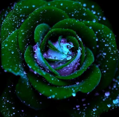 Nature's pride :)