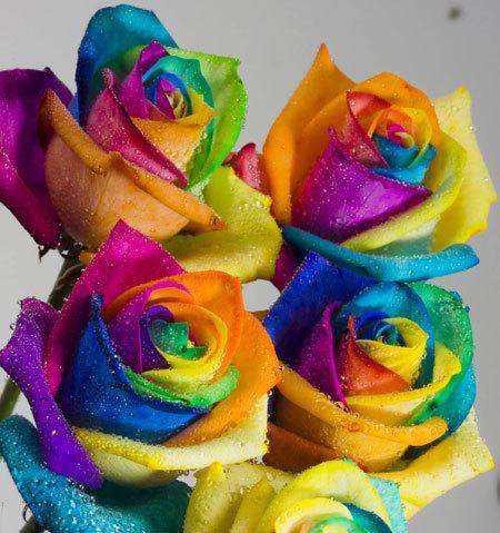 pelangi, rainbow Ros