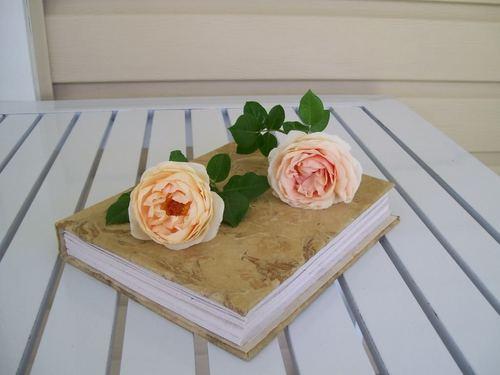 Two Розы