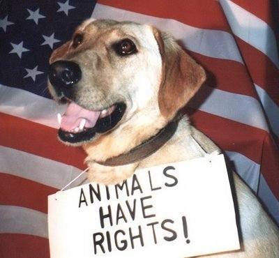 animal rights - animal-rights Photo