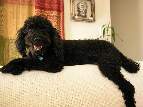 max my dog