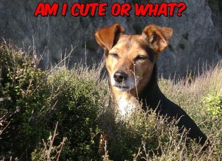 Am I cute ?