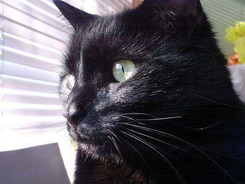 black gatos wallpaper entitled avatar