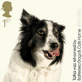 Border Collie Stamp Collection