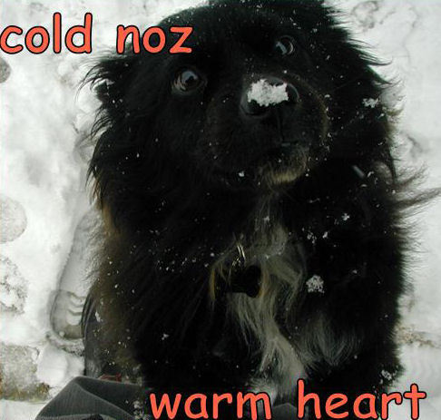 Cold Nose , Warm 심장 !