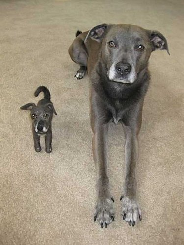 Dog and clone dog toy !!