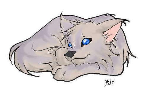 Lupin pup