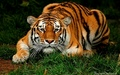 Most beautiful animal :)