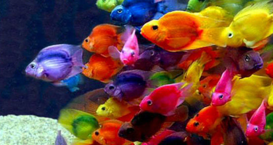 Colorful Marine Life Underwater In The Caribbean Sea With ... |Colorful Underwater Life