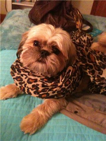 Pipa's dog! ;P