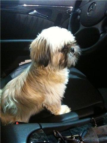 Pipa's dog