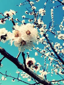 """Spring is nature's way to say """"Let's party"""" :D"""
