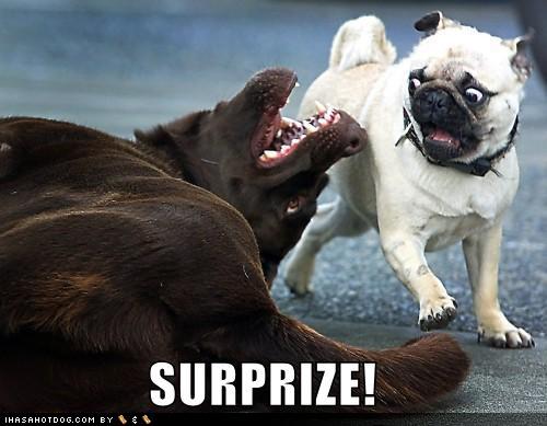 Surprize...............