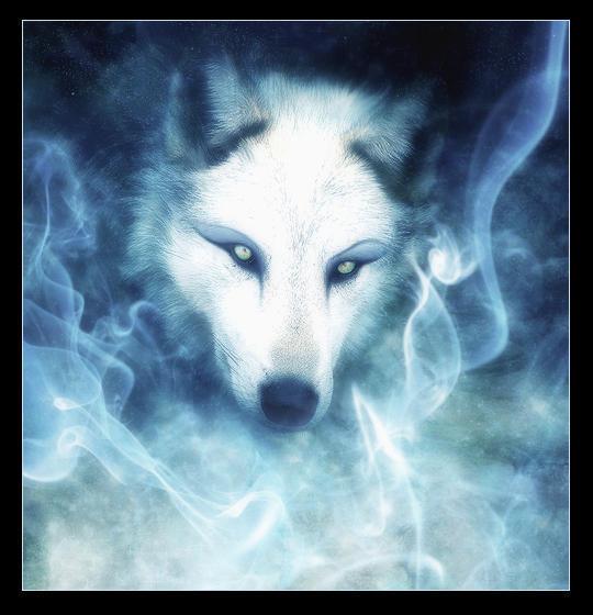 Wolf's rain kiba