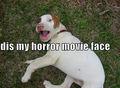 my horror face .......grrrrrr