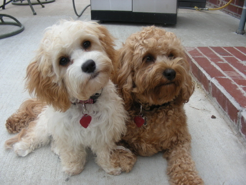 2-puppies