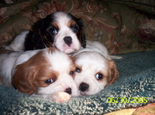 3-puppies...so nice!
