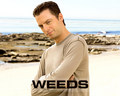 Andy Botwin - weeds wallpaper