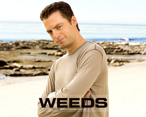 Weeds wallpaper called Andy Botwin