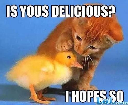 Cat & Chick