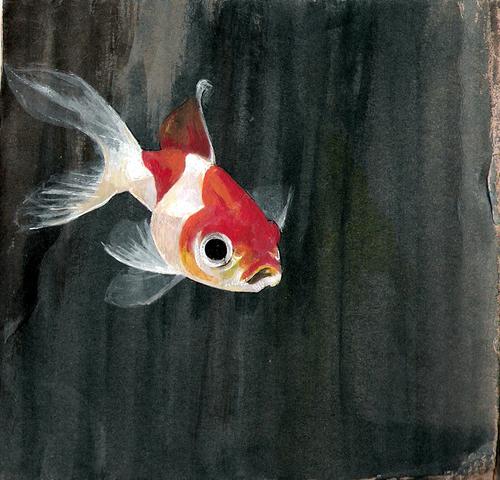 Nat the goldfish!