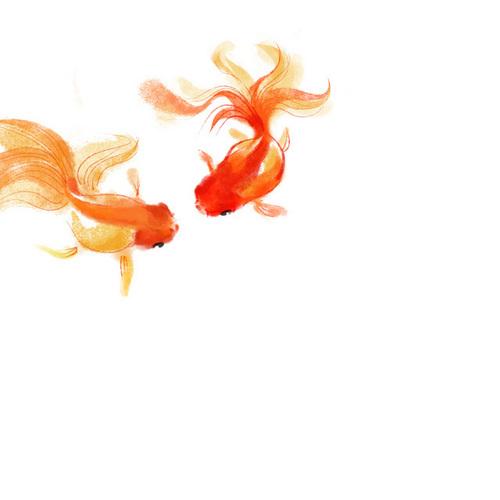 Nat the goldfish & her boyfriend!