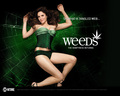 Oh what a tangled web... - weeds wallpaper