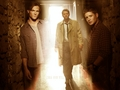 Team Free Will wolpeyper I