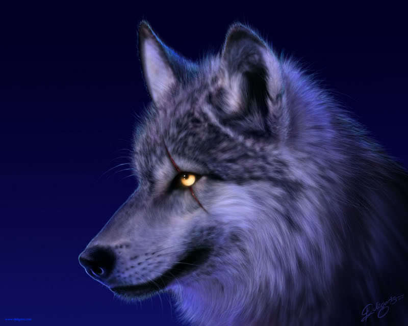 World of wolfs and werewolfs wolf eye