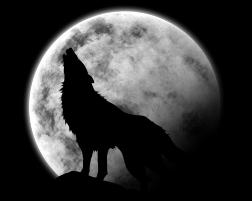 lobo Howl
