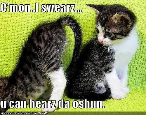 lol gatitos
