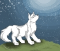 wolf howle - anime-animal photo