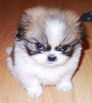 Angry tuta