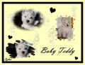 Baby Teddy  - sweety-babies fan art