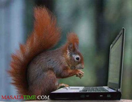 COMPUTER GEEK - very-funny-animals-club Photo