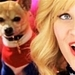 Legally Blonde 2 - legally-blonde icon