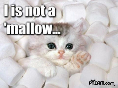 MALLOW - very-funny-animals-club Photo
