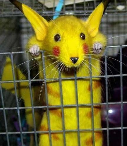 pikachu IS REAL