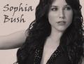 Sophia cespuglio, bush