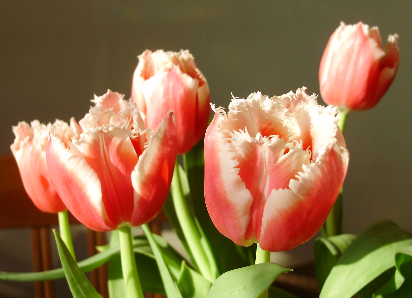 tulips in the spring - photo #14