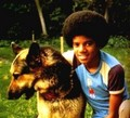 do you like the dogs Michael??