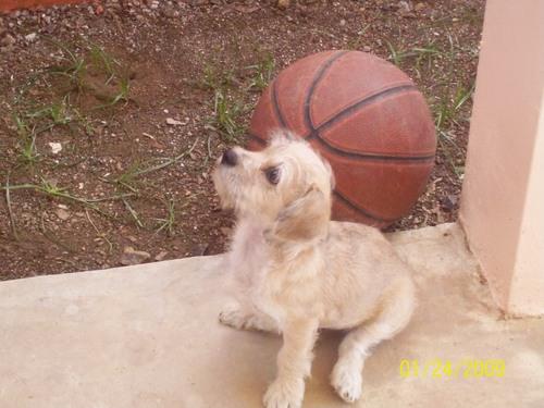 my dog Ponky ( R.I.P )